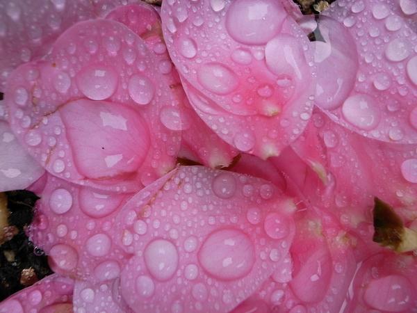 f:id:gzutetsu:20121222121025j:image