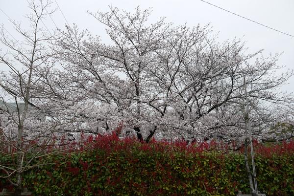 f:id:gzutetsu:20130331143545j:image
