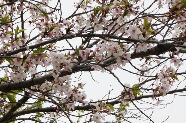 f:id:gzutetsu:20130414140110j:image