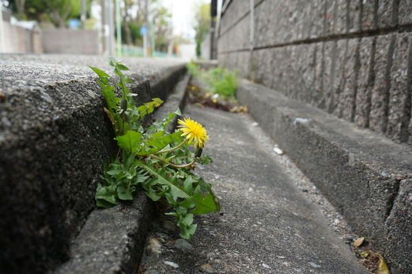 f:id:gzutetsu:20130414140838j:image