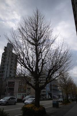 f:id:gzutetsu:20131211083746j:image