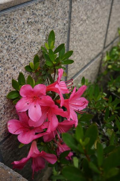 f:id:gzutetsu:20140525093108j:image