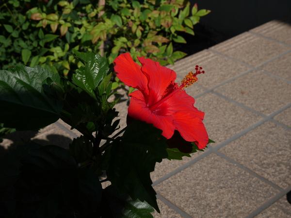 f:id:gzutetsu:20140712080857j:image