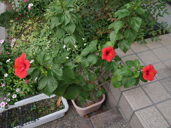 f:id:gzutetsu:20141114080033j:image