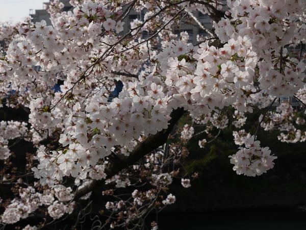 f:id:gzutetsu:20150331081618j:image