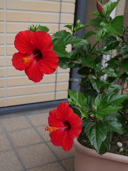 f:id:gzutetsu:20150627085005j:image