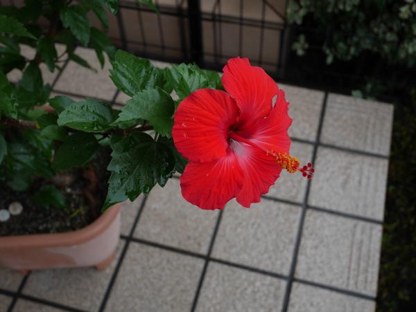 f:id:gzutetsu:20150723075007j:image