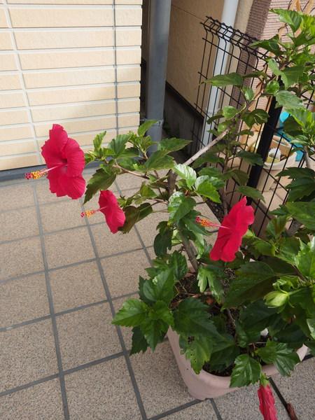f:id:gzutetsu:20150918080251j:image