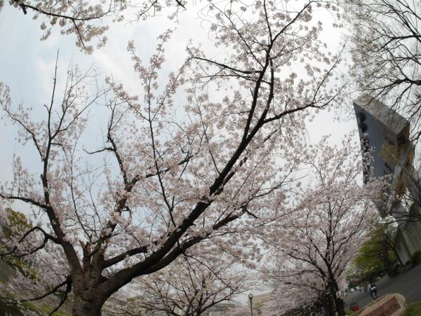 f:id:gzutetsu:20160402132652j:image