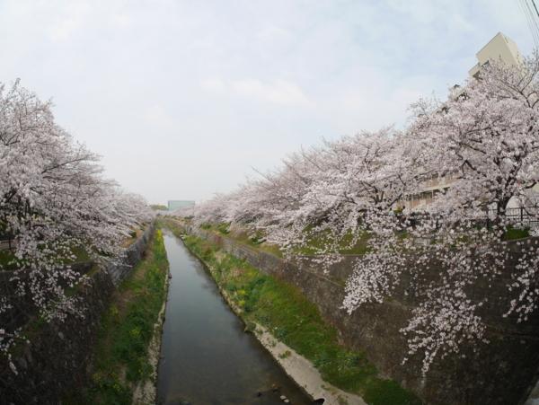 f:id:gzutetsu:20160402134845j:image