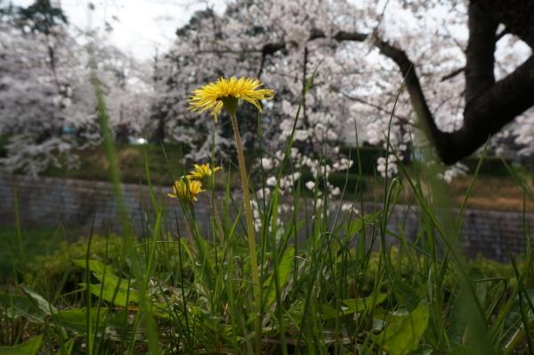f:id:gzutetsu:20160402141124j:image
