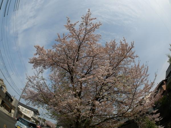 f:id:gzutetsu:20180401152454j:image
