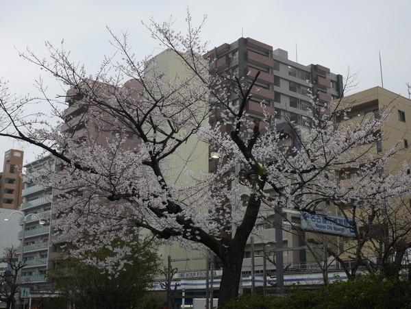 f:id:gzutetsu:20190330145044j:plain