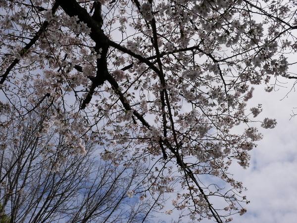 f:id:gzutetsu:20200329124632j:image