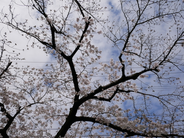 f:id:gzutetsu:20200329125926j:image