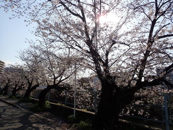 f:id:gzutetsu:20200402081627j:image