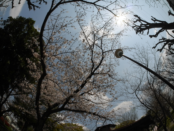 f:id:gzutetsu:20200404125410j:image