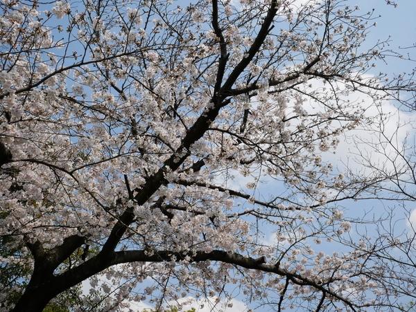 f:id:gzutetsu:20200404125821j:image