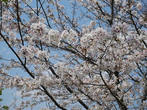 f:id:gzutetsu:20200404130223j:image