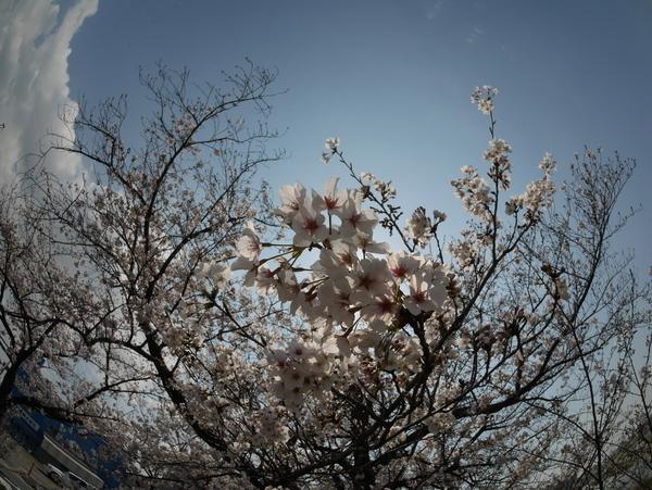 f:id:gzutetsu:20200404130410j:image