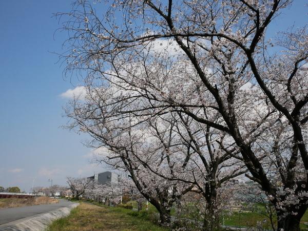 f:id:gzutetsu:20200404133143j:image