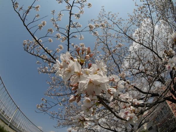 f:id:gzutetsu:20200404140330j:image