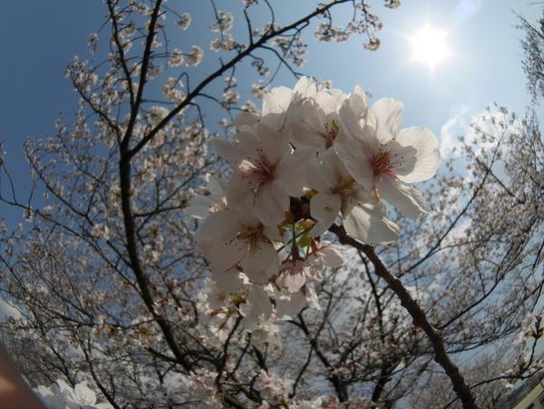 f:id:gzutetsu:20200404140533j:image