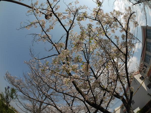f:id:gzutetsu:20200404140705j:image