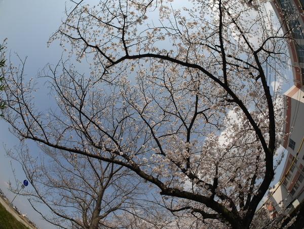 f:id:gzutetsu:20200404140755j:image
