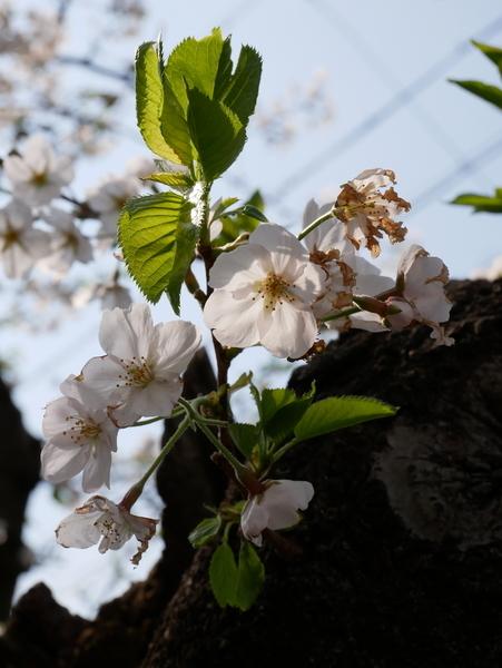 f:id:gzutetsu:20200404144855j:image