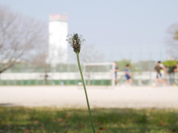 f:id:gzutetsu:20200429150316j:image