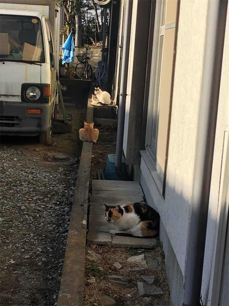 f:id:h-katori:20180127201638j:image