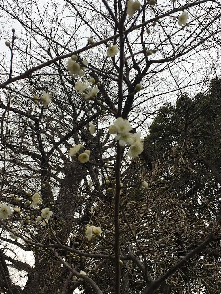f:id:h-katori:20180201123524j:image