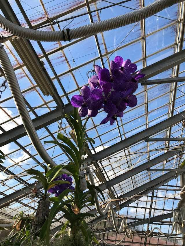 グリーンパーク温室の花