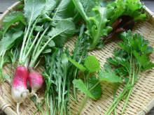 収穫したハーブと野菜