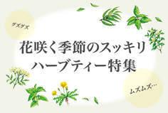 花咲く季節のスッキリハーブティー特集