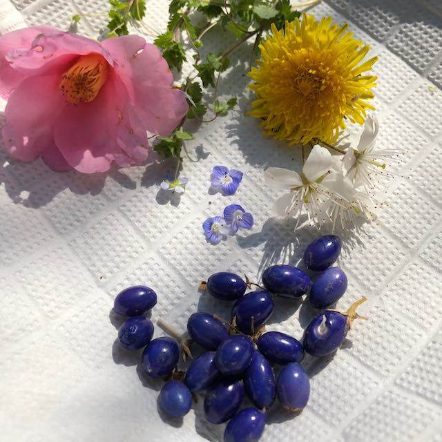 庭の花たちを少しいただきました。