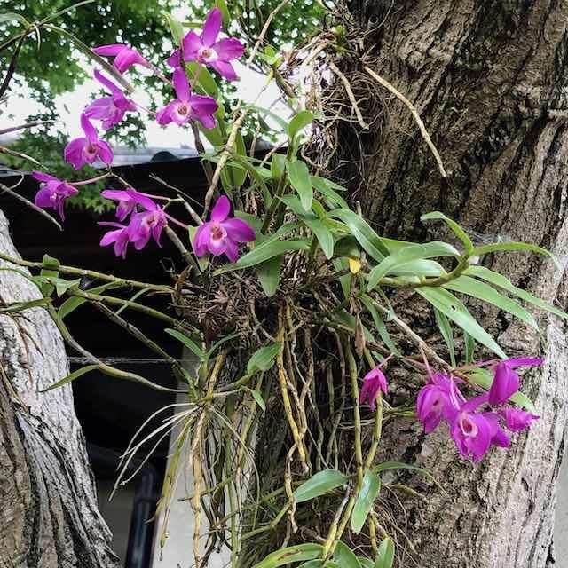 楓の木に宿らせたお花