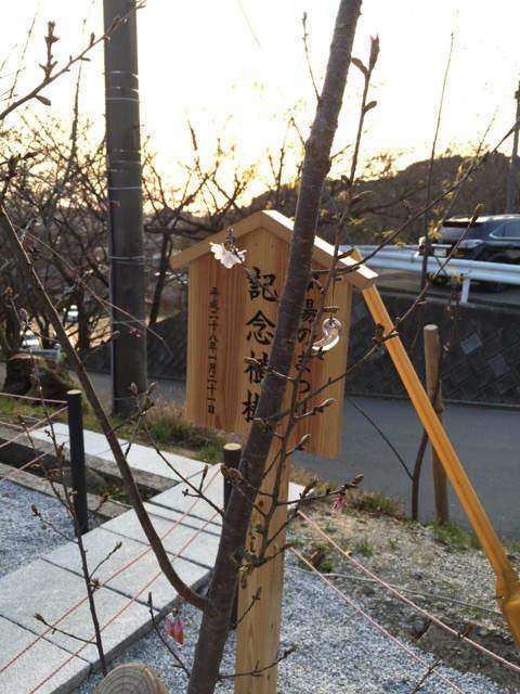 嵐さんが植樹された木