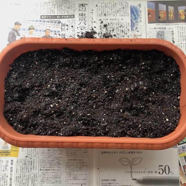 プランターに土を入れました。
