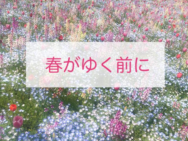 パステルカラーの花畑