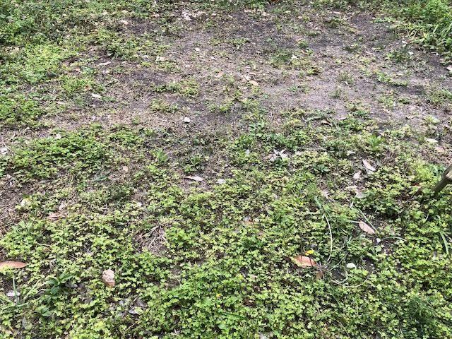 草が生えています