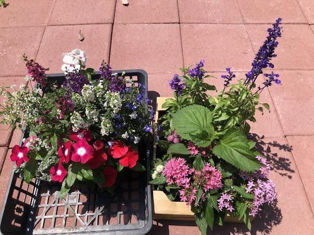 夏の花の苗