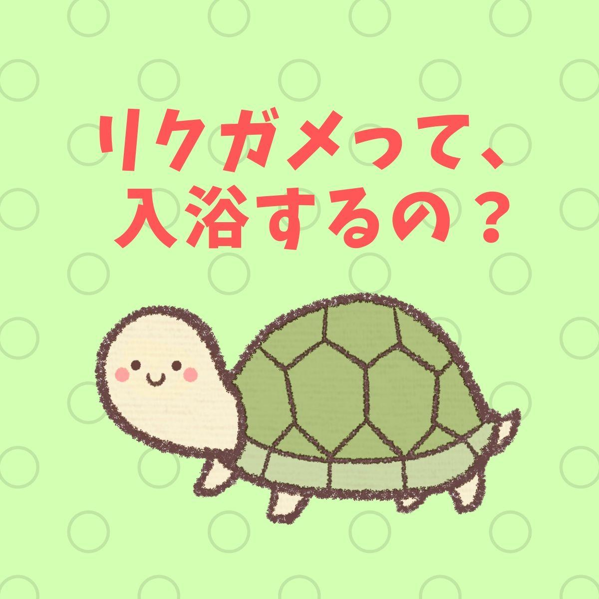 f:id:h_yukichi:20190630195054j:plain