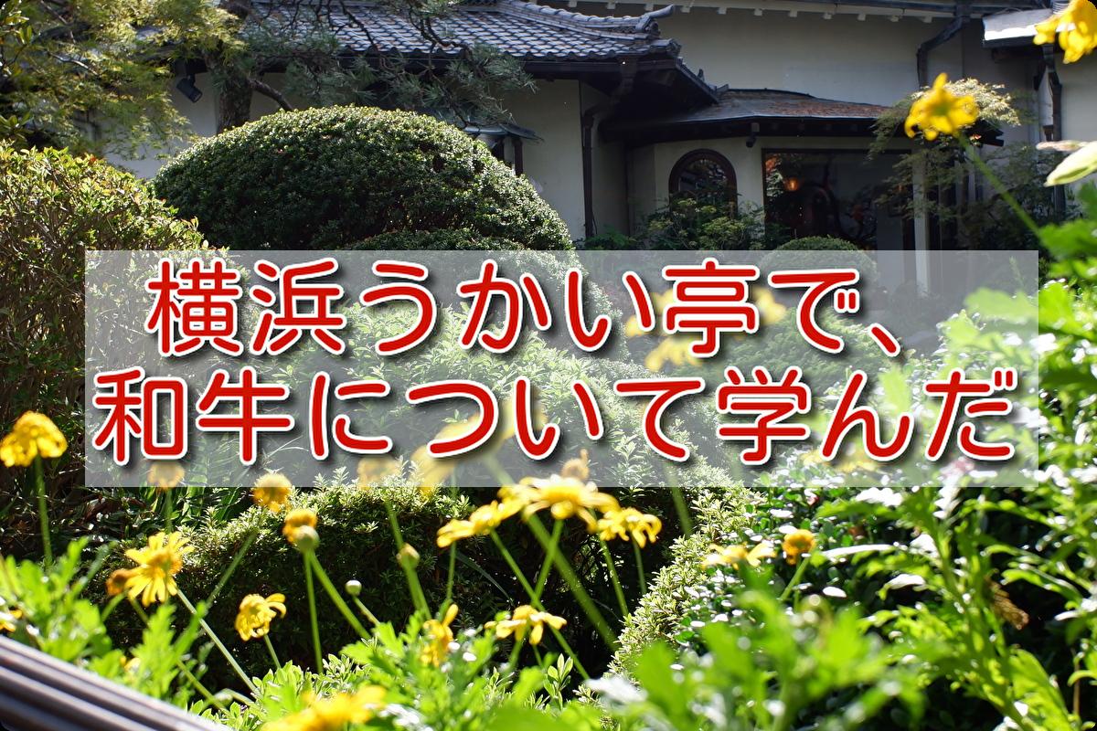 f:id:h_yukichi:20190929210129p:plain