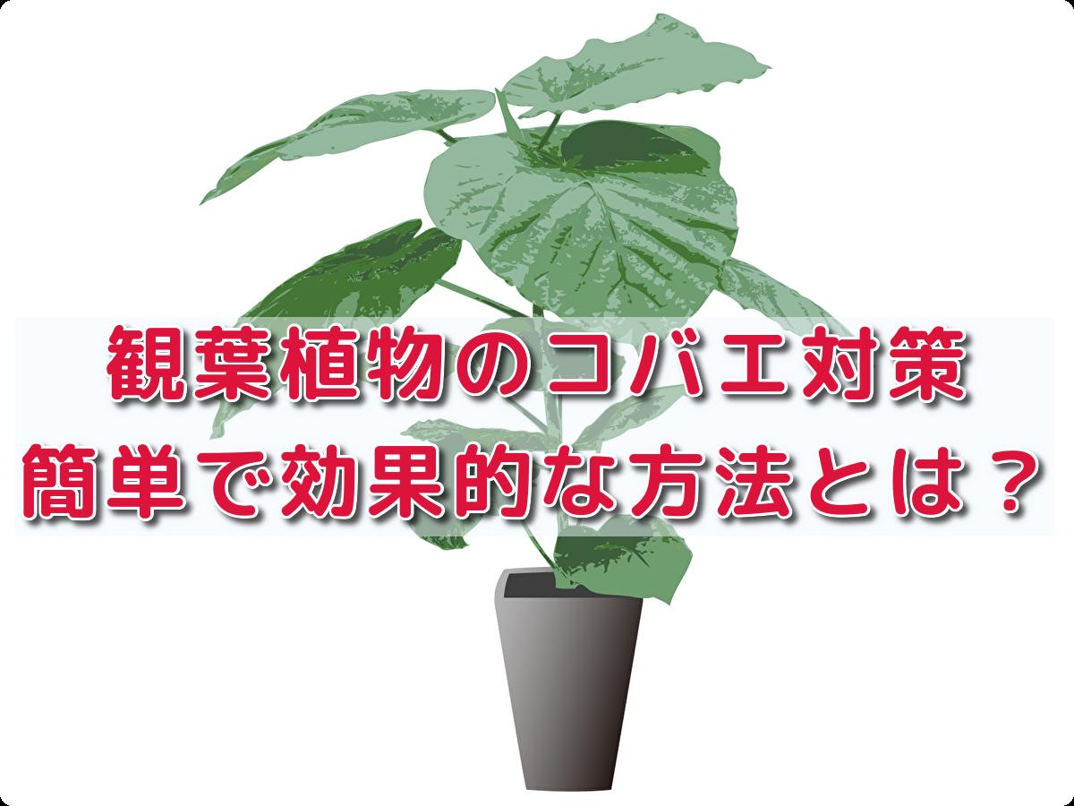 f:id:h_yukichi:20200730184151p:plain
