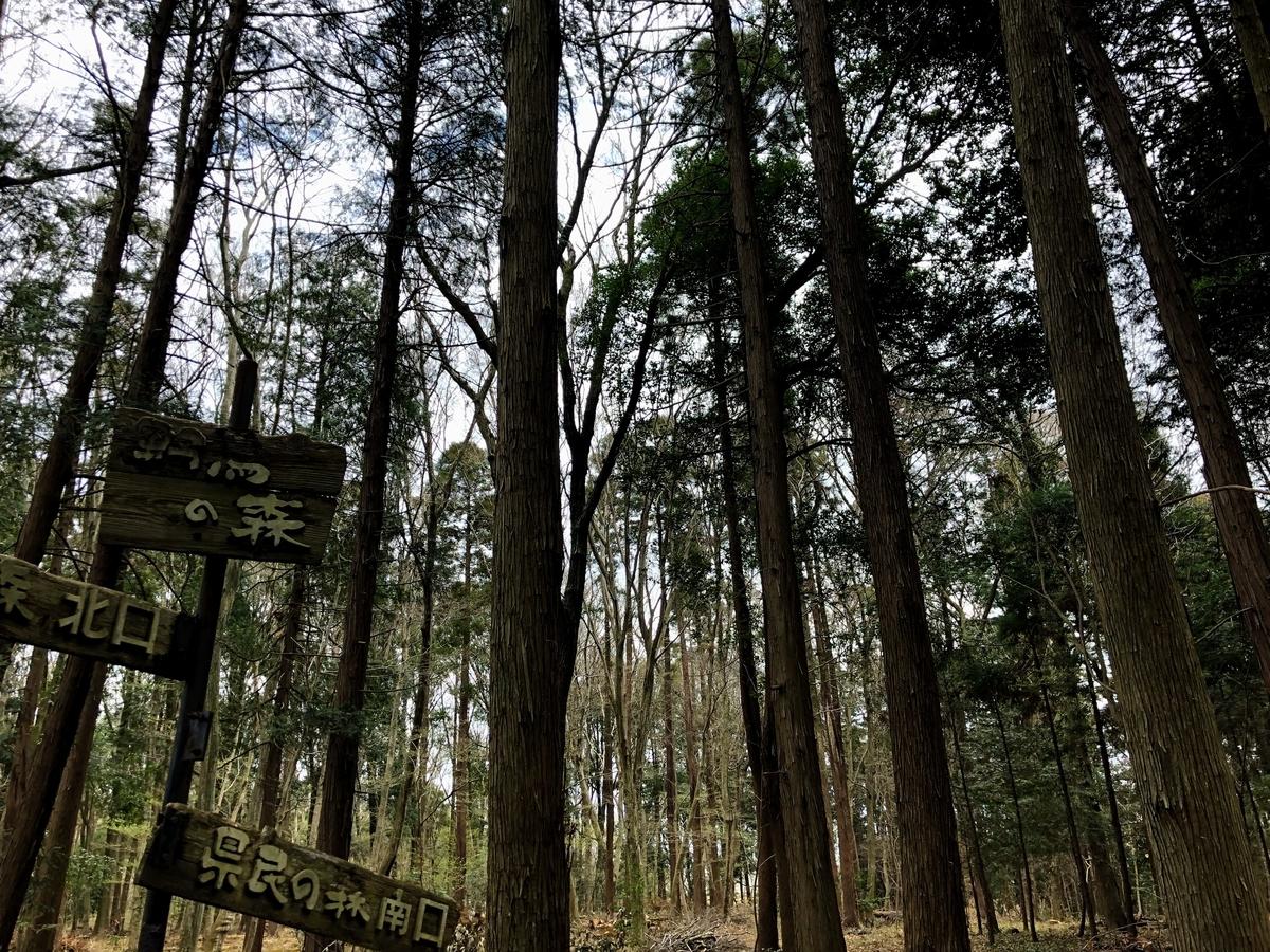 千葉県立船橋県民の森