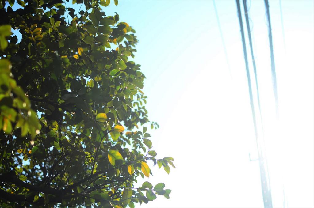 f:id:hachi-log:20180314090010j:plain