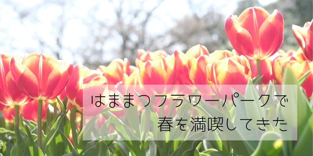 f:id:hachi-log:20190411221742j:plain