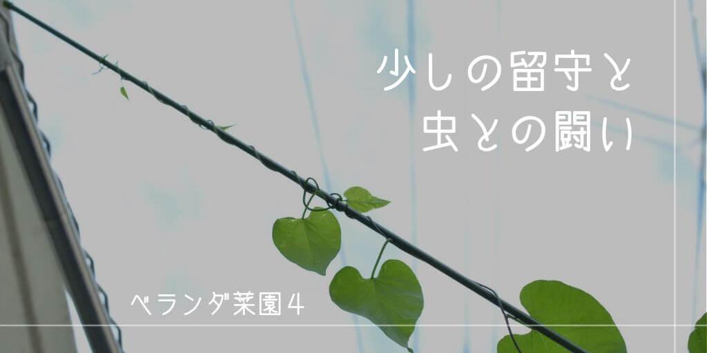 f:id:hachi-log:20190611123651j:plain